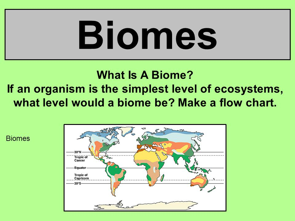 Biomes What Is A Biome? If An Organism Is The Simplest Level Of