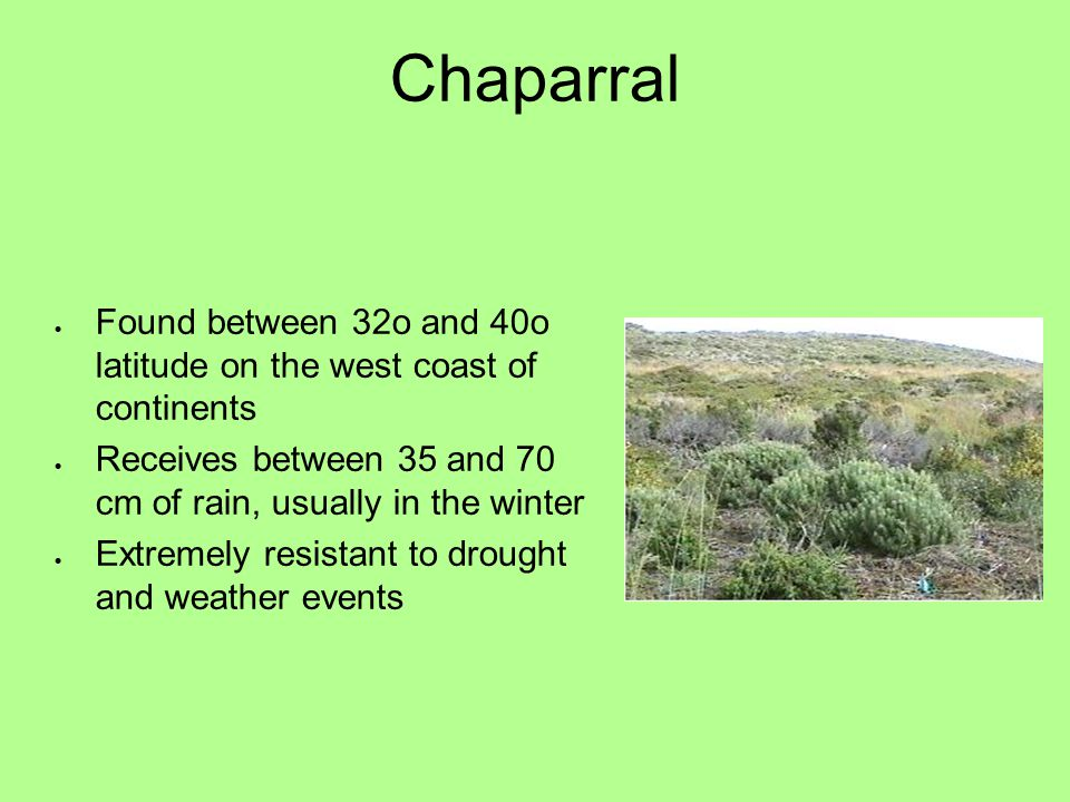 Chaparral Found between 32o and 40o latitude on the west coast of continents. Receives between 35 and 70 cm of rain, usually in the winter.