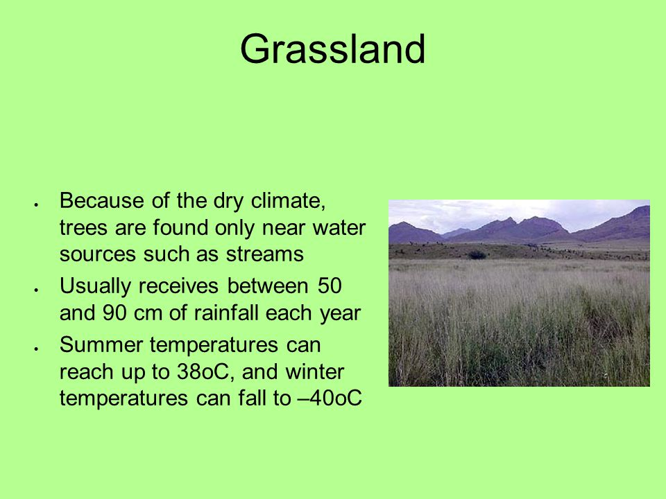 Grassland Because of the dry climate, trees are found only near water sources such as streams.