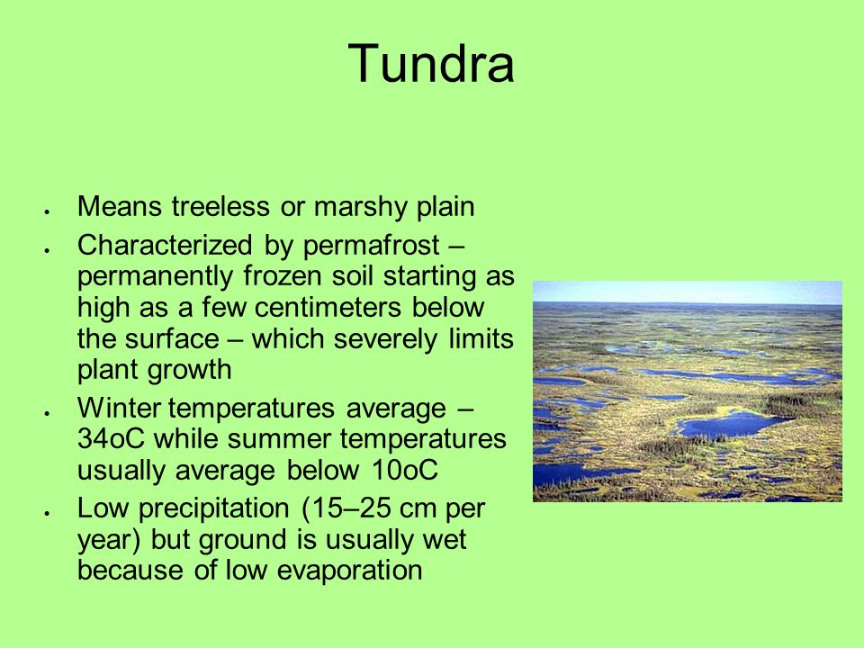 Tundra Means treeless or marshy plain