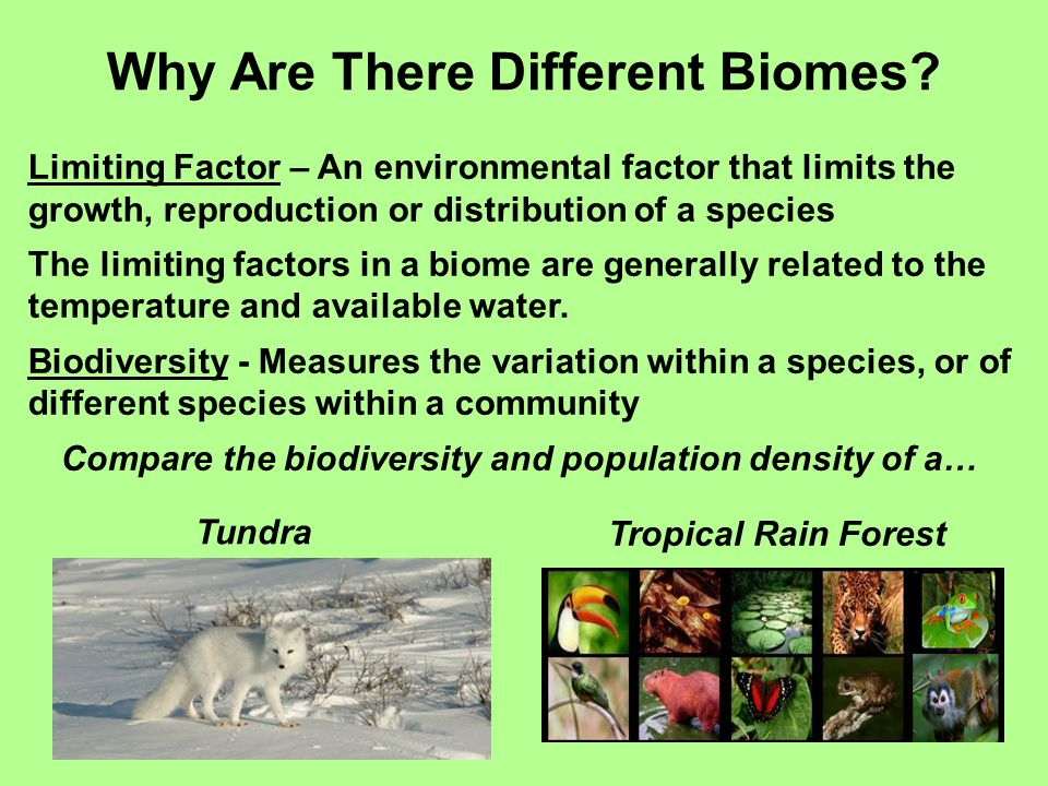 Why Are There Different Biomes