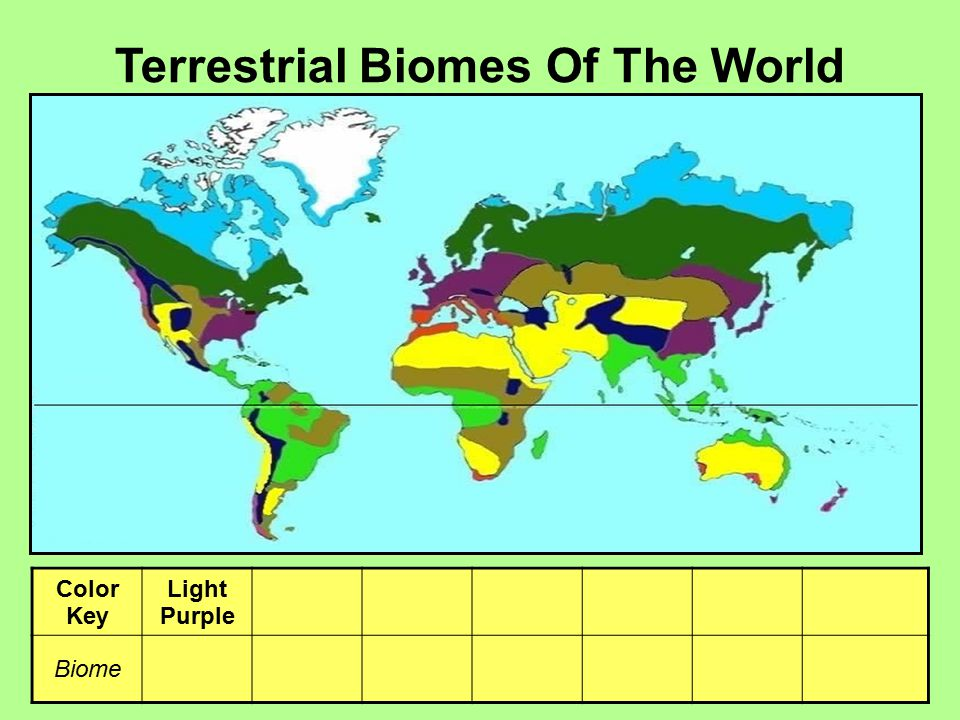 Terrestrial Biomes Of The World