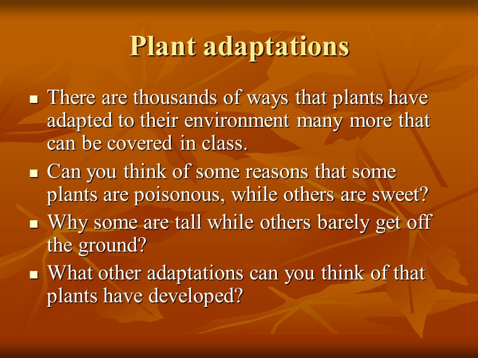 Plant adaptations There are thousands of ways that plants have adapted to their environment many more that can be covered in class.