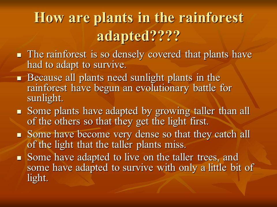 How are plants in the rainforest adapted