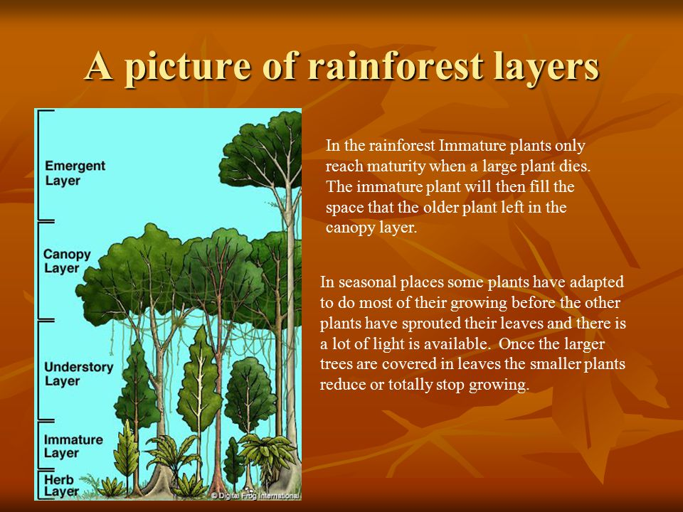 A picture of rainforest layers