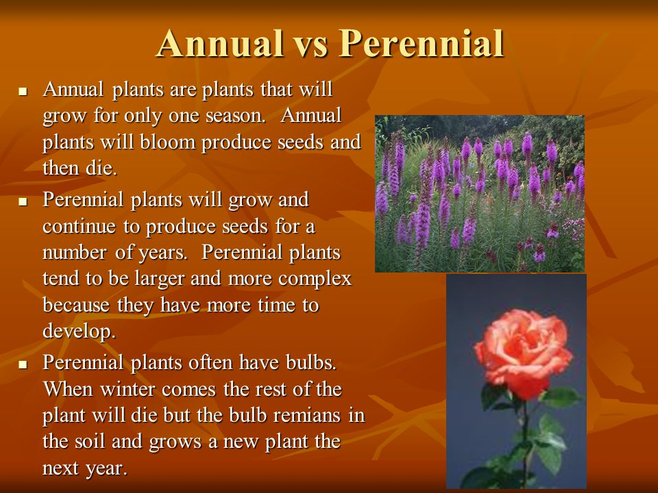 Annual vs Perennial Annual plants are plants that will grow for only one season. Annual plants will bloom produce seeds and then die.