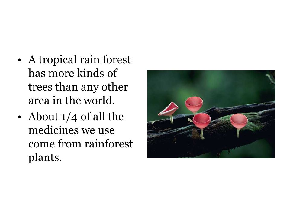 A tropical rain forest has more kinds of trees than any other area in the world.