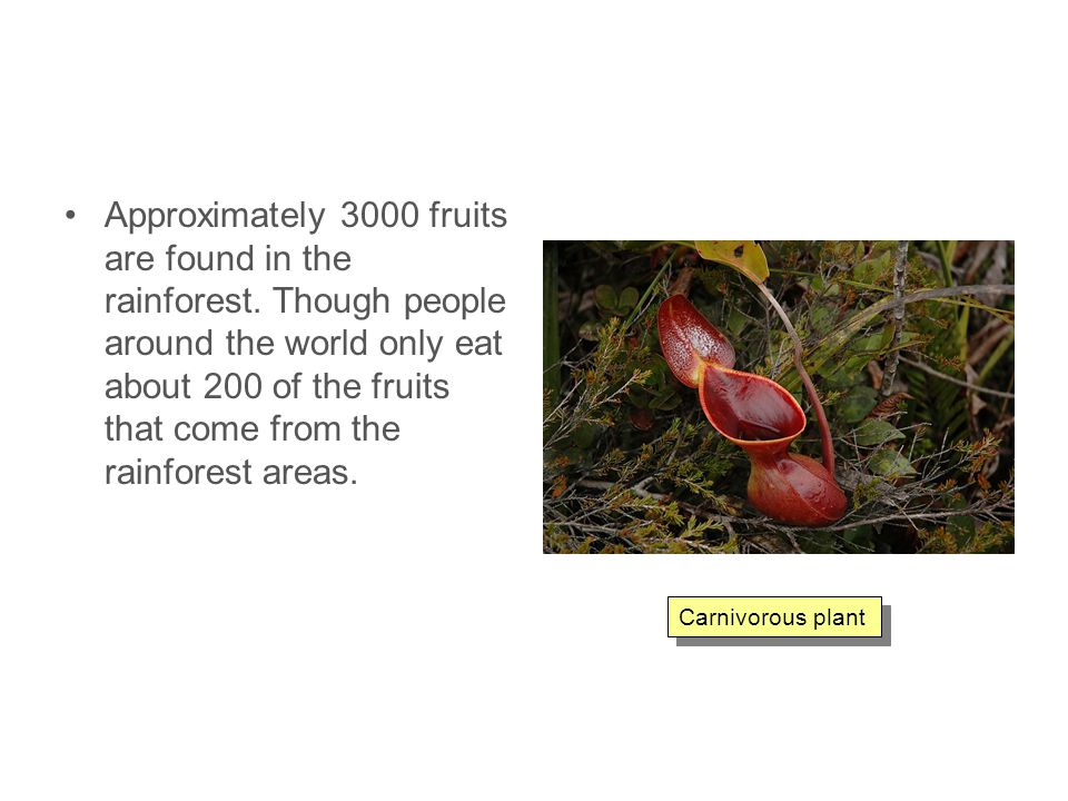 Approximately 3000 fruits are found in the rainforest