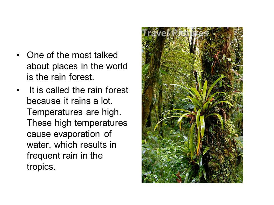 One of the most talked about places in the world is the rain forest.