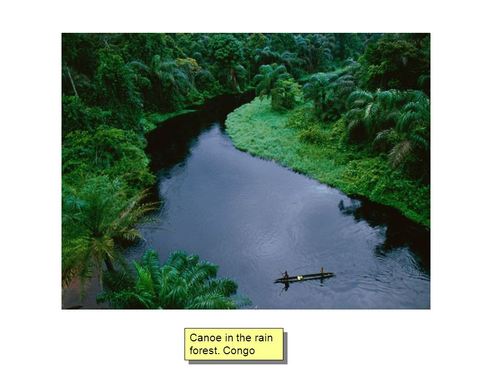 Canoe in the rain forest. Congo