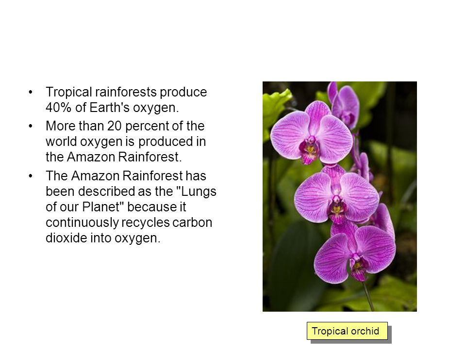 Tropical rainforests produce 40% of Earth s oxygen.