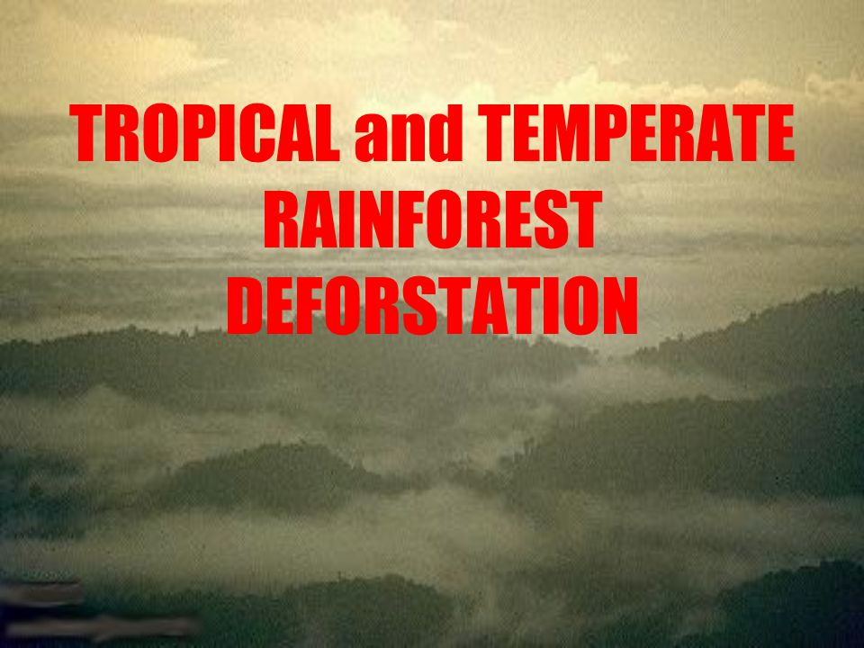 TROPICAL and TEMPERATE RAINFOREST DEFORSTATION