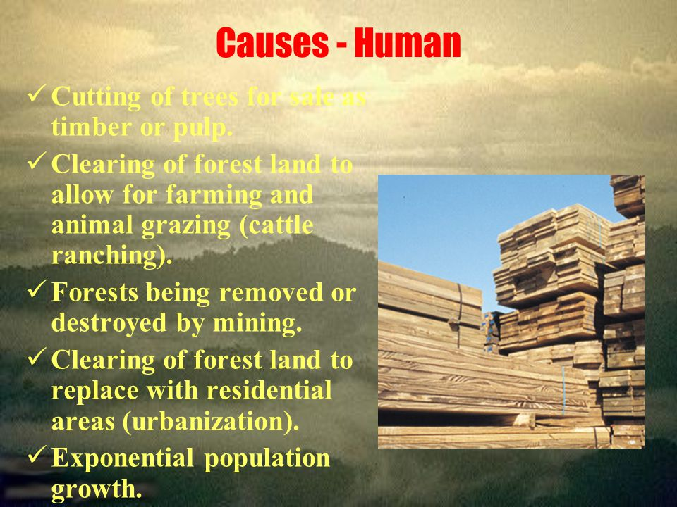 Causes - Human Cutting of trees for sale as timber or pulp.