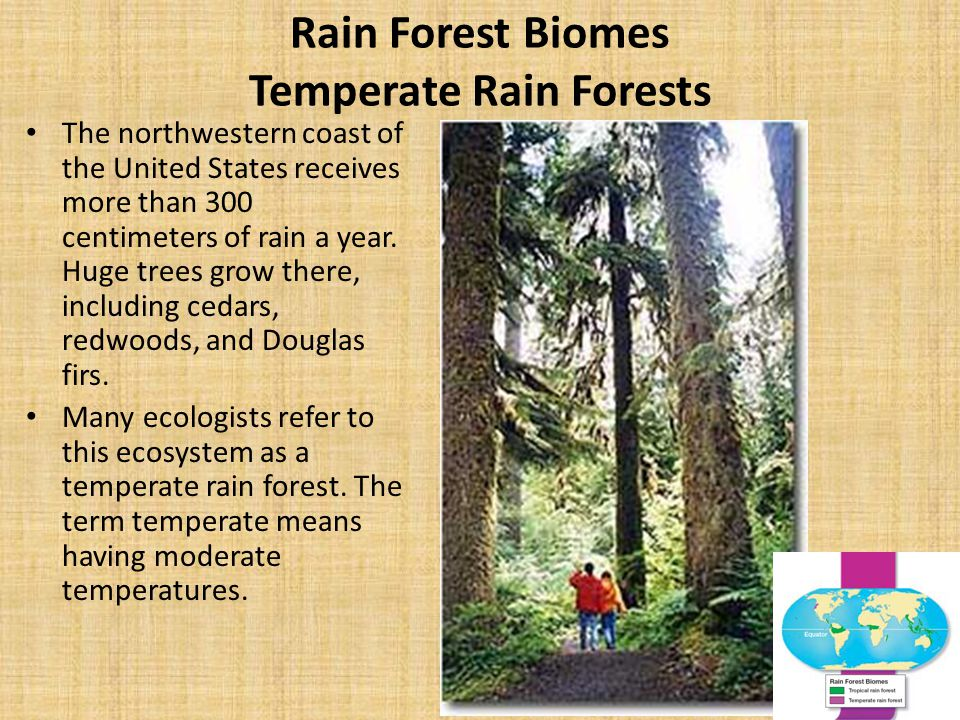 Rain Forest Biomes Temperate Rain Forests