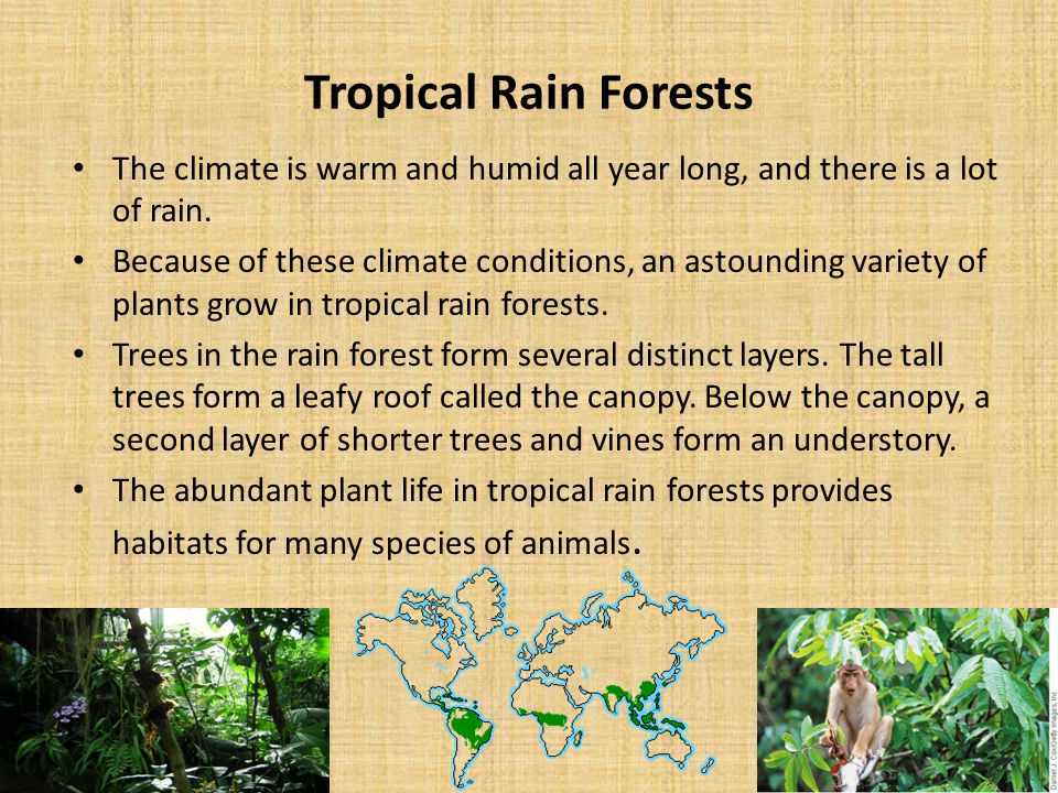 Tropical Rain Forests The climate is warm and humid all year long, and there is a lot of rain.