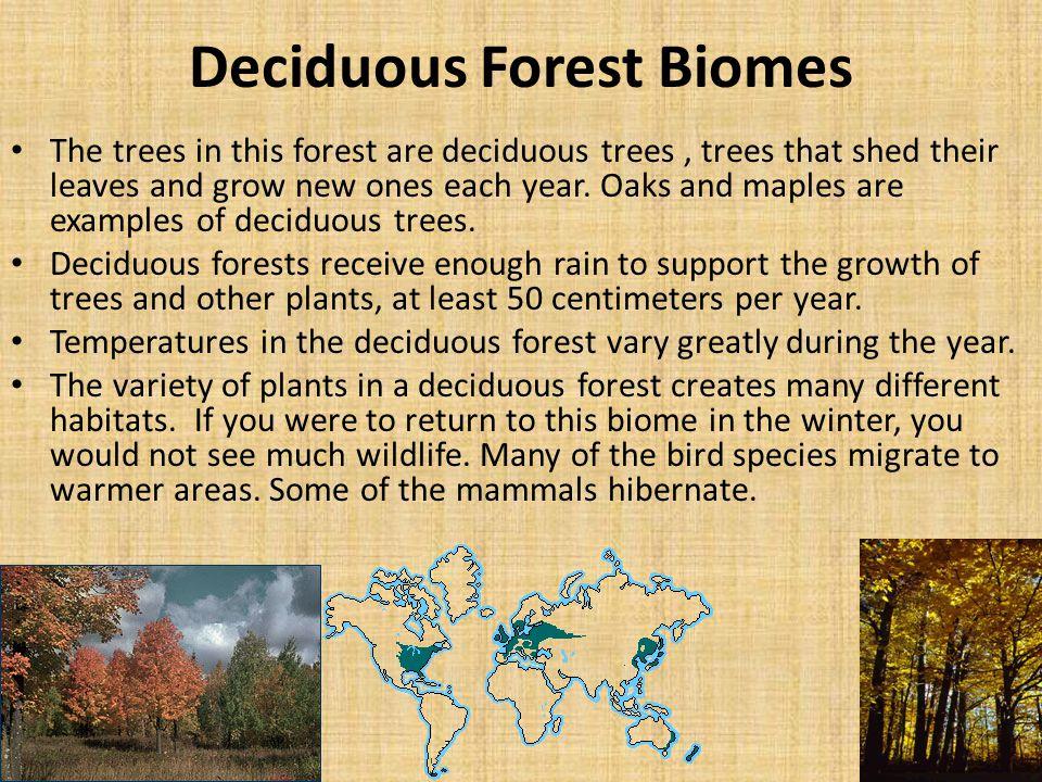 Deciduous Forest Biomes