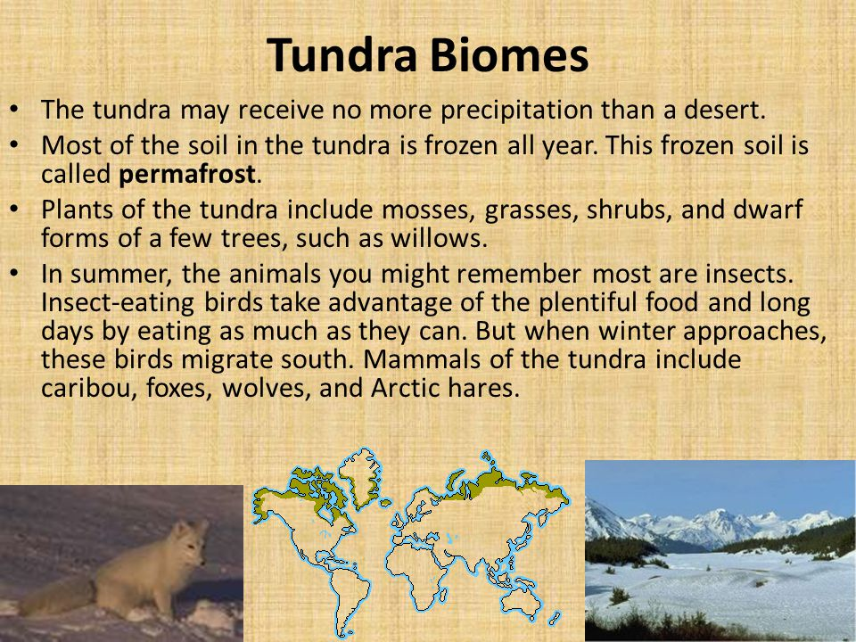 Tundra Biomes The tundra may receive no more precipitation than a desert.