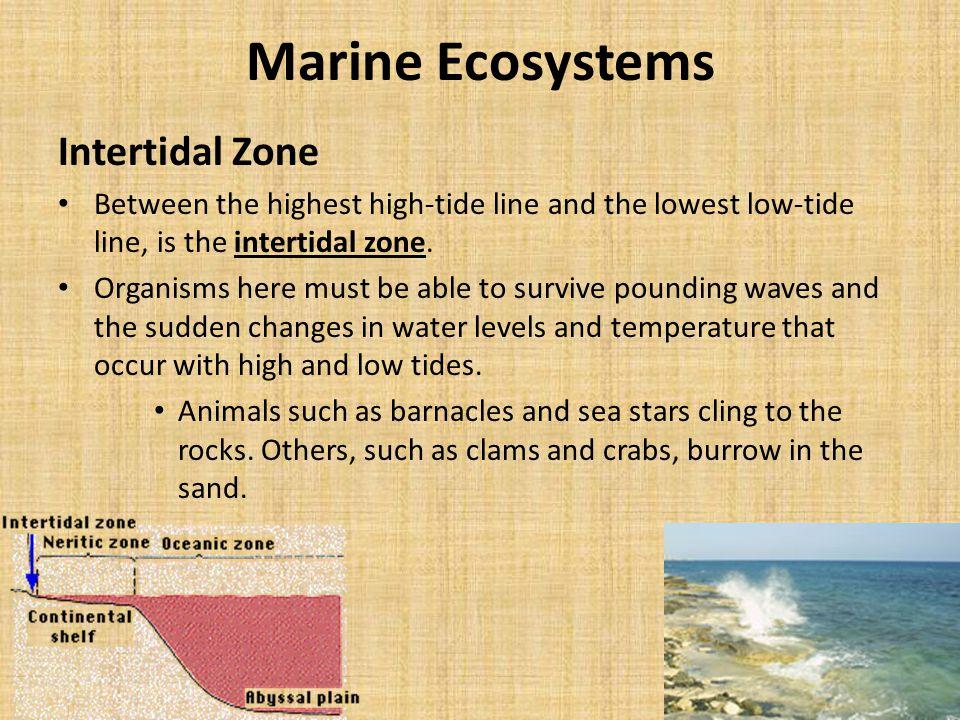 Marine Ecosystems Intertidal Zone