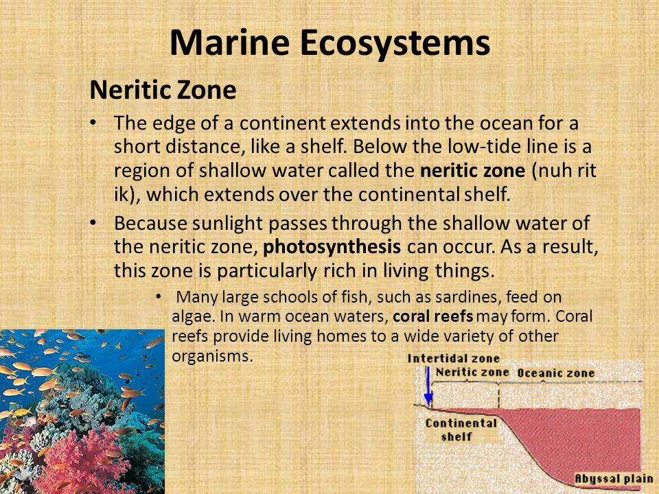 Marine Ecosystems Neritic Zone