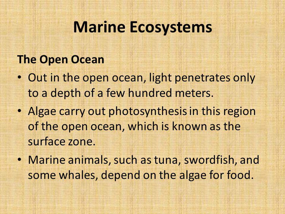 Marine Ecosystems The Open Ocean