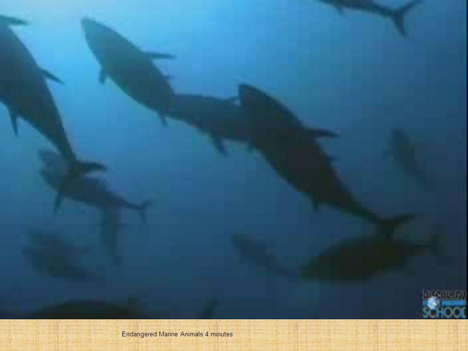 Endangered Marine Animals 4 minutes