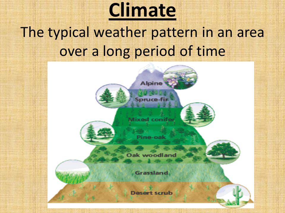 Climate The typical weather pattern in an area over a long period of time