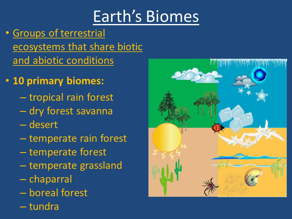 Earth's Biomes Groups of terrestrial ecosystems that share biotic and abiotic conditions. 10 primary biomes: