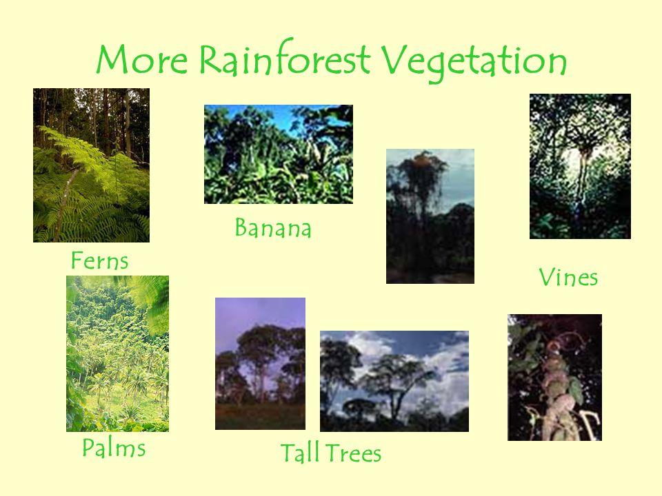More Rainforest Vegetation