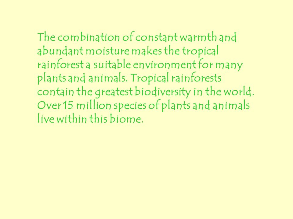 The combination of constant warmth and abundant moisture makes the tropical rainforest a suitable environment for many plants and animals.