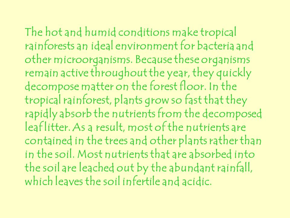 The hot and humid conditions make tropical rainforests an ideal environment for bacteria and other microorganisms.