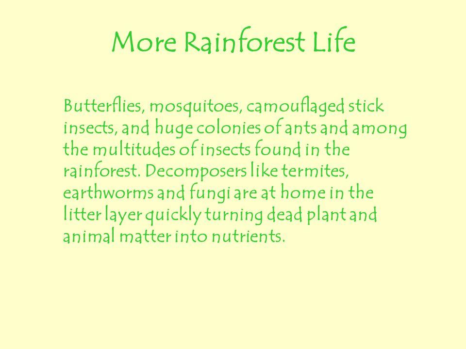 More Rainforest Life