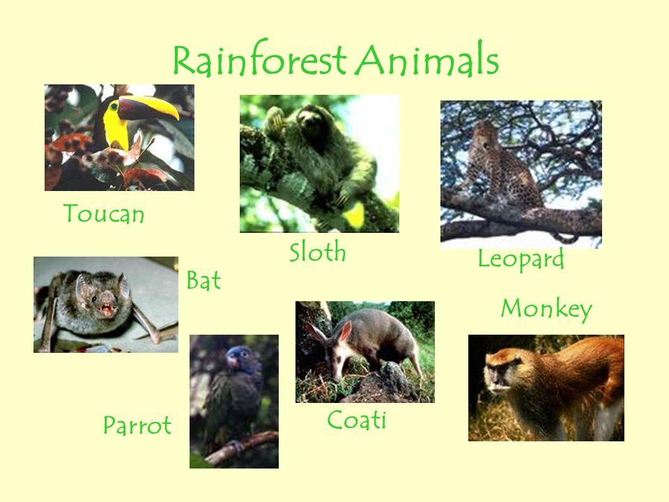 Rainforest Animals Toucan Sloth Leopard Bat Monkey Coati Parrot