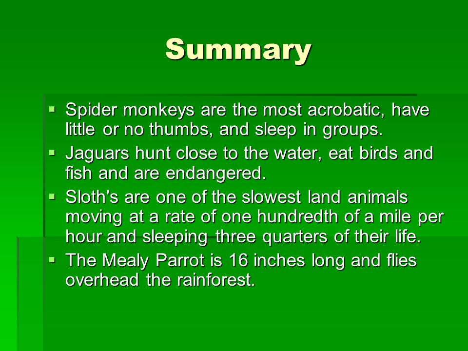 Summary Spider monkeys are the most acrobatic, have little or no thumbs, and sleep in groups.