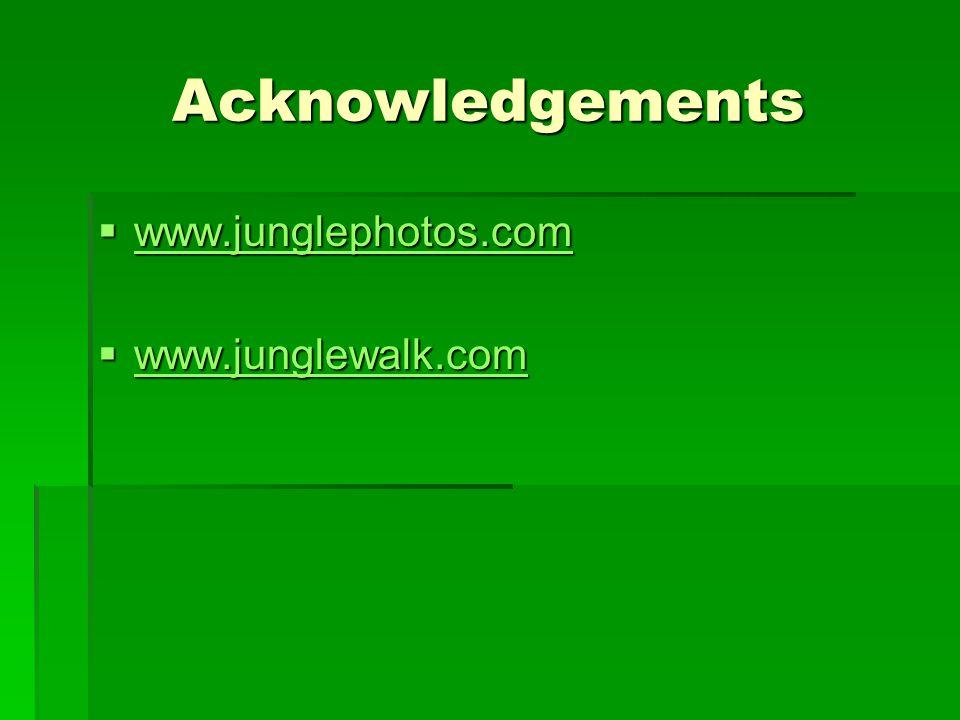 Acknowledgements www.junglephotos.com www.junglewalk.com