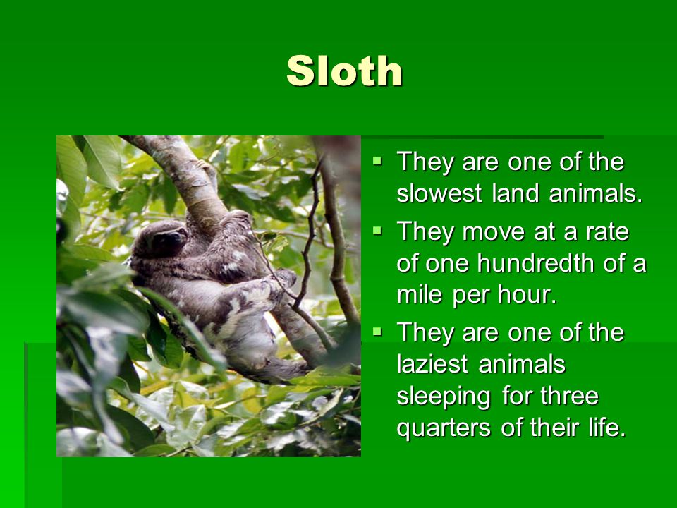Sloth They are one of the slowest land animals.