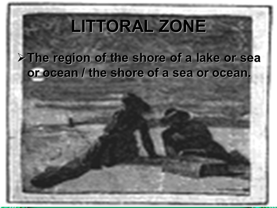 LITTORAL ZONE The region of the shore of a lake or sea or ocean / the shore of a sea or ocean.