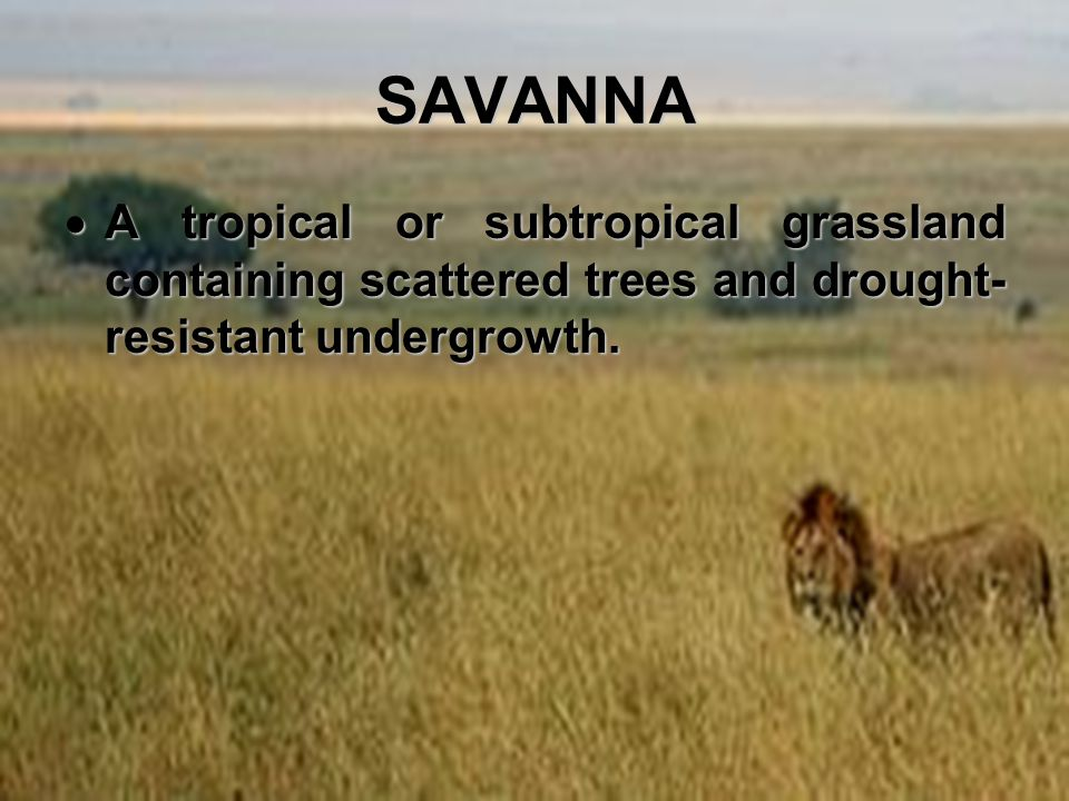 SAVANNA A tropical or subtropical grassland containing scattered trees and drought-resistant undergrowth.