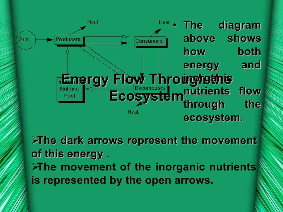 Energy Flow Through the Ecosystem