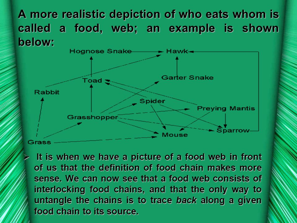 A more realistic depiction of who eats whom is called a food, web; an example is shown below: