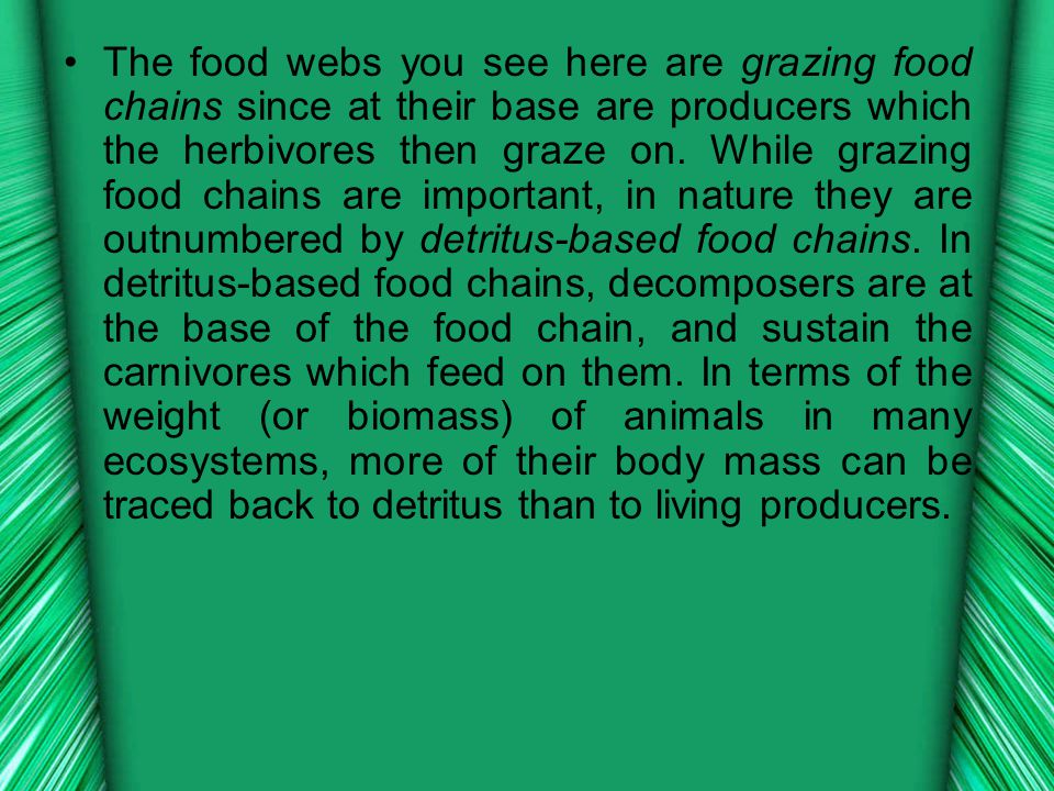 The food webs you see here are grazing food chains since at their base are producers which the herbivores then graze on.