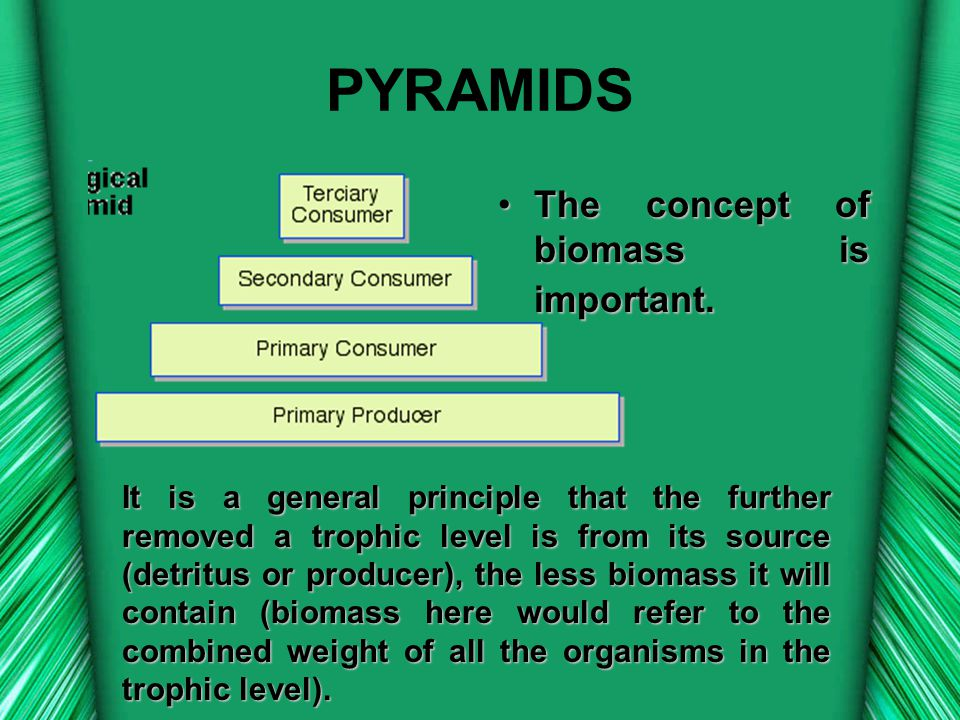 PYRAMIDS The concept of biomass is important.
