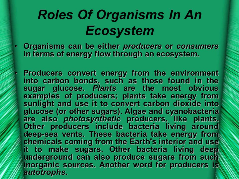 Roles Of Organisms In An Ecosystem