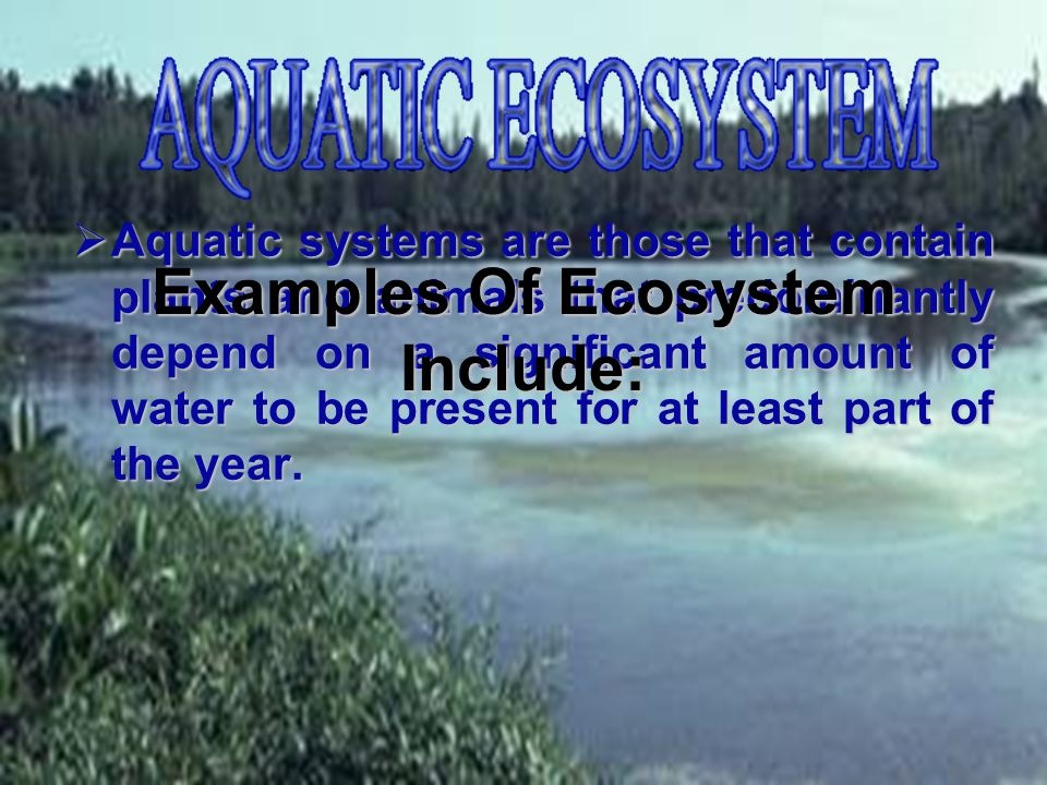 Examples Of Ecosystem Include: