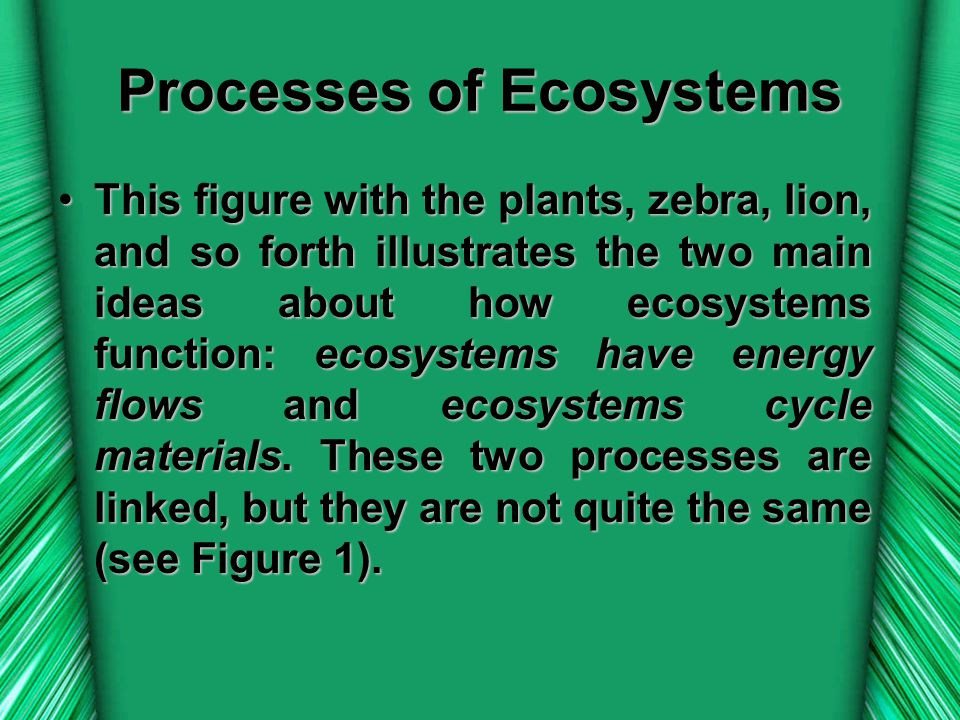 Processes of Ecosystems
