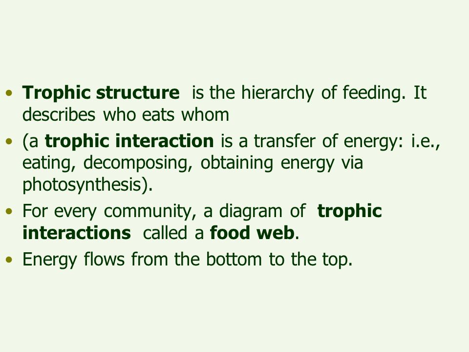 Trophic structure is the hierarchy of feeding