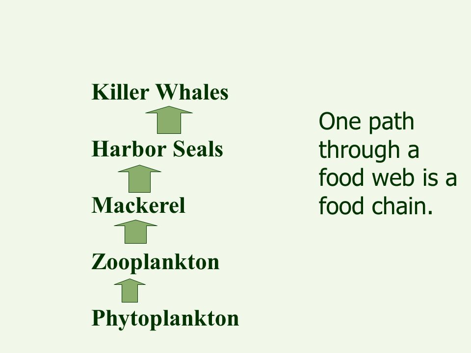 Killer Whales Harbor Seals. Mackerel. Zooplankton.