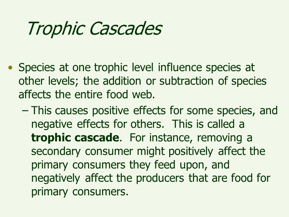 Trophic Cascades Species at one trophic level influence species at other levels; the addition or subtraction of species affects the entire food web.