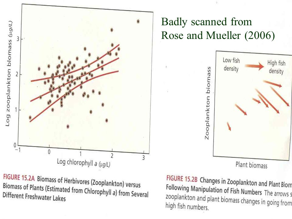 Badly scanned from Rose and Mueller (2006)