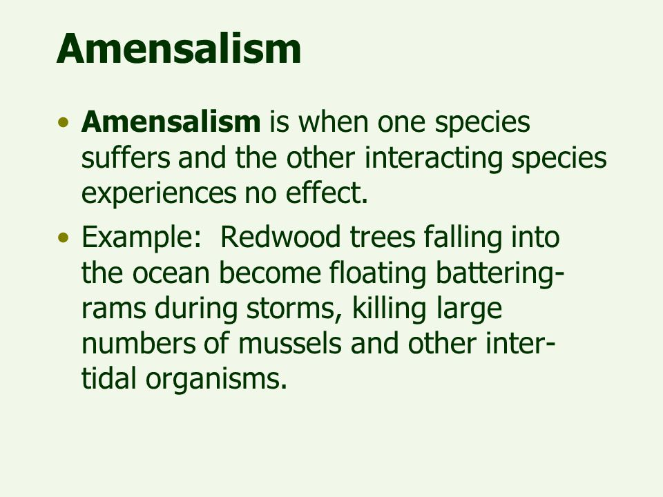 Amensalism Amensalism is when one species suffers and the other interacting species experiences no effect.