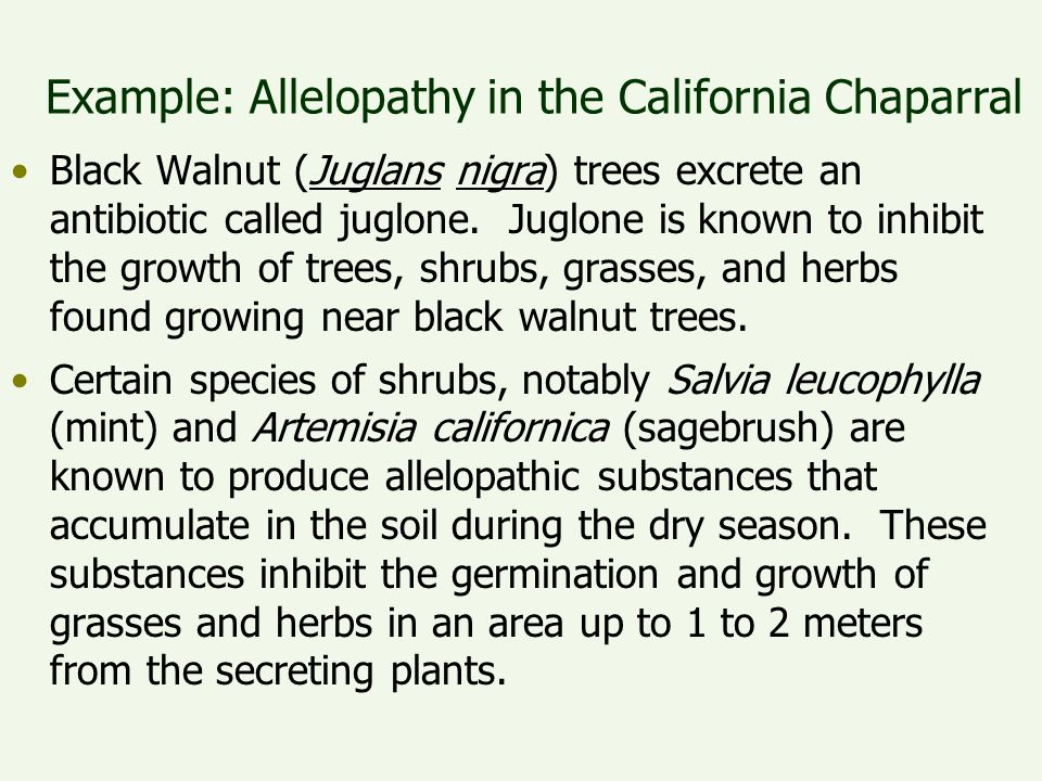 Example: Allelopathy in the California Chaparral
